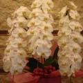 祝花№2(お花に金魚とKGKのマーク入りです)