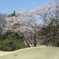 高坂CC岩殿C№1の桜