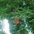 10番ホール横の花