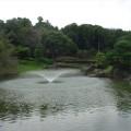 カメリアヒルズCC池№4